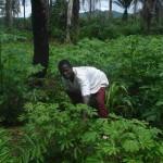 Evangelist Alpha Garden