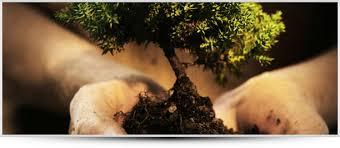 images plantje